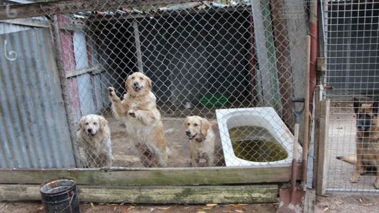 Dogs were living in cages inside a corrugated iron compound.