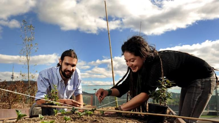 Dan Stanton and Karina Bontes Forward tend to the garden on the rooftop of Lena Karmel Lodge at the ANU.