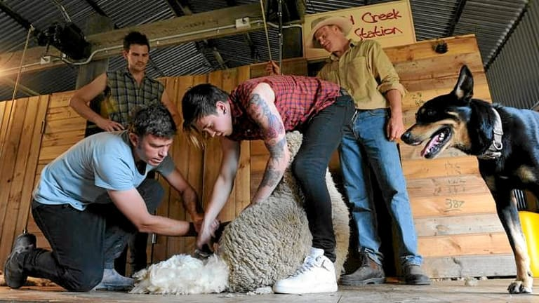 Reece Mastin, winner of the 2011 series of <i>X-Factor</i> Australia, tries his hand at sheep farming at Gold Creek Station in Hall, Canberra. Here he gets some tips from Yass shearer, Dave Hants and watched by Reece's guitarist, Marcus Catanzaro, left and sheep farmer, Craig Starr, right and of course the sheepdog.