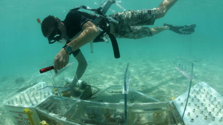 Members of the Ove Hoegh-Guldberg lab working with the first in-situ reef acidification system located on the reef flat of Heron Island in 2010.