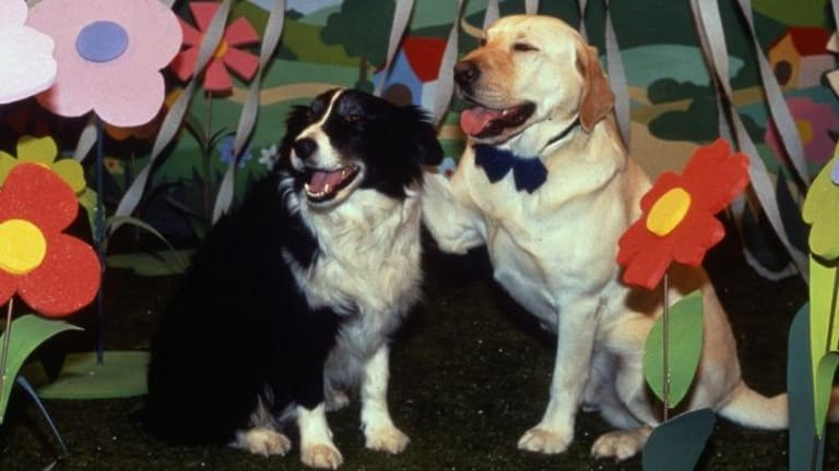 Dog day ... the bizarre dream sequence in which Bouncer fantasises about getting married to Clarrie McLachlan's dog, Rosie.