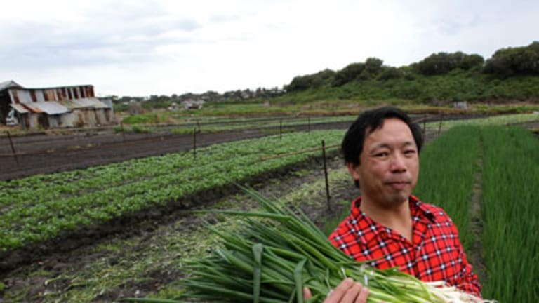 Endangered species ... Gordon Ha in his threatened market garden at Botany.