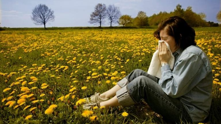 About one in five Australians are affected by seasonal allergic rhinitis, also known as hay fever.