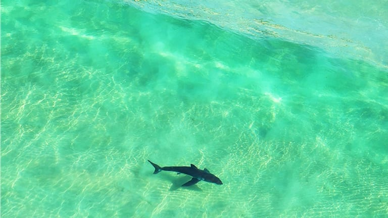 A shark was seen swimming away before the girl's mother made a frantic call for help after the attack in Cairns.