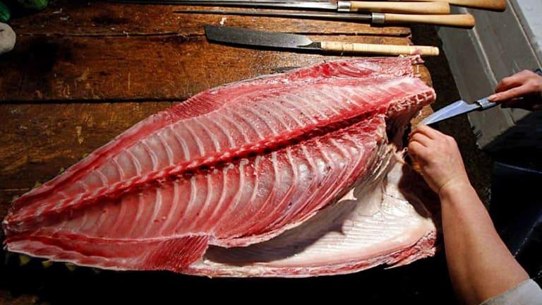 Too radioactive to eat ... the fish of Fukushima.