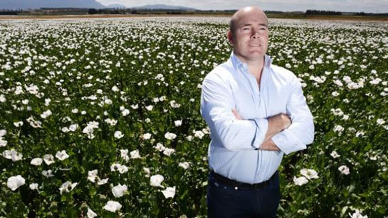 Jarrod Ritchie stands in a field of poppy flowers near Cressy in Northern Tasmania.