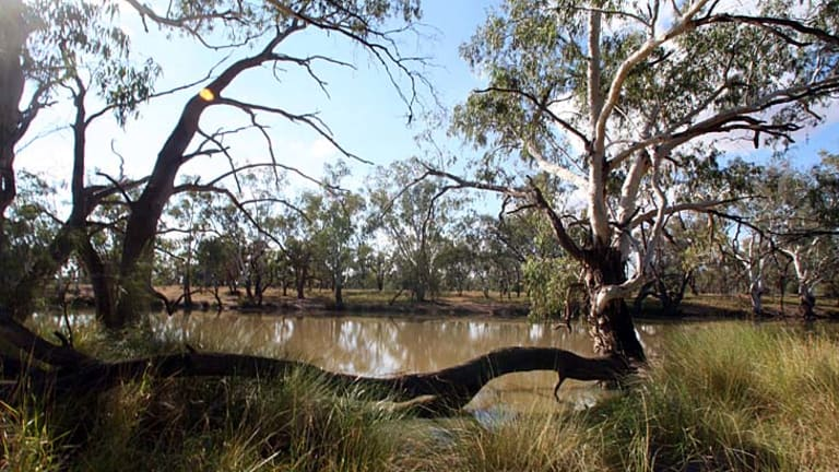 The Murray-Darling Basin Authority's plan condemns the river system to 'continual decline and possible collapse' according to the Wilderness Society.