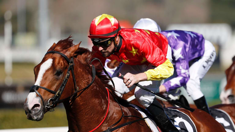 Matured: Tye Angland wins on Assimilate during his first preparation and he resumes in the Eskimo Prince Stakes at Warwick Farm on Saturday.