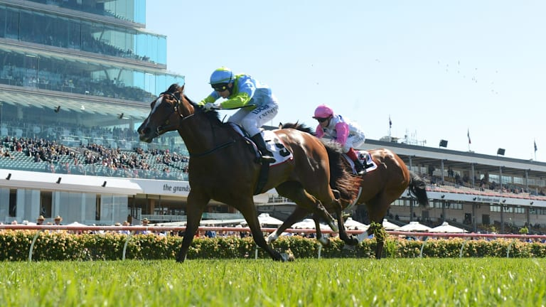 One for the girls: Oakleigh Girl, pictured here scoring on Melbourne Cup day in 2013, ran second in last year's Magic Millions 2YO Classic.