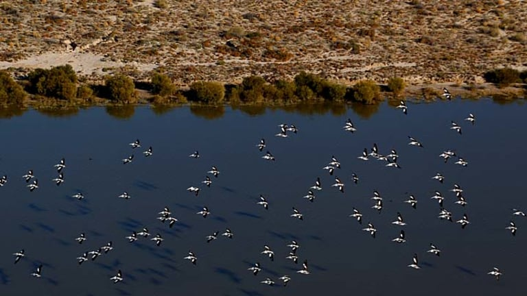 Pelicans glide over Kallakoopah Creek just before it flows into Lake Eyre. But while wildlife has flourished, hardships for farmers remain.