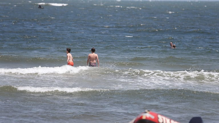 Come on in: Some swimmers at St Kilda beach appeared unfazed by a shark sighting on January 8.