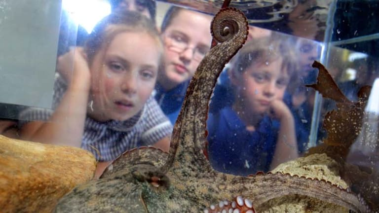 Octopus's garden ... Mosman students at the opening of the $20m Sydney Institute of Marine Science at Chowder Bay.