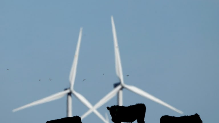 No bull: Australians strongly support more renewable energy.