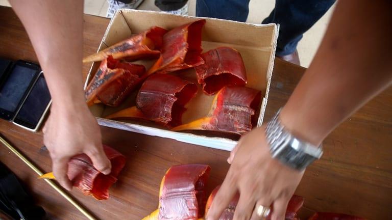 Hornbill casques seized in Indonesia.