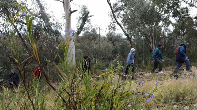 Bushwalking through Farrer Ridge.