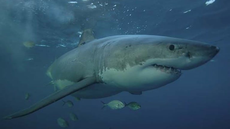 In 2012 Western Australia became known as the shark attack capital of the world.