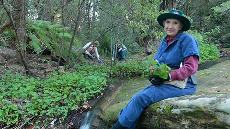 Living and giving … Yvonne McMaster helping to clean up native bush at Ku-ring-gai, where more than a quarter of residents aged 15 and over volunteer for community work.