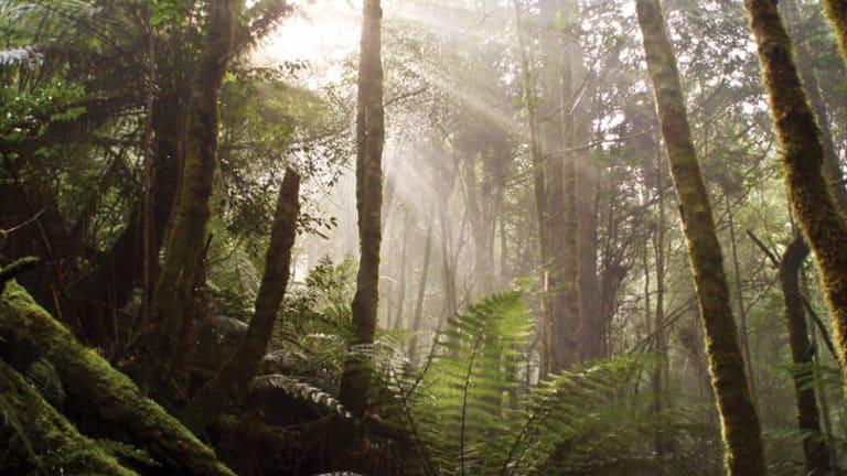 Tasmania's Tarkine wilderness.