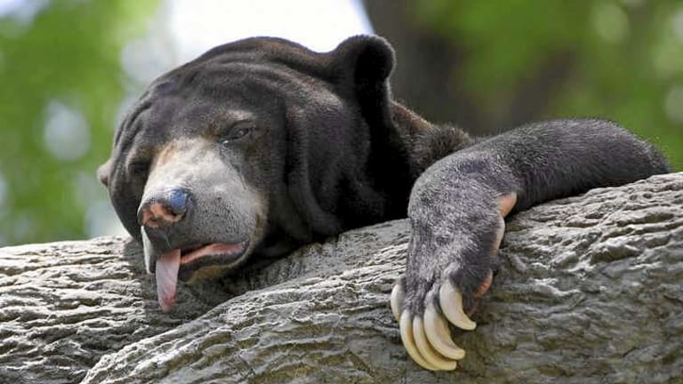 Heat wave in the US in 2012 hit zoo animals among others.