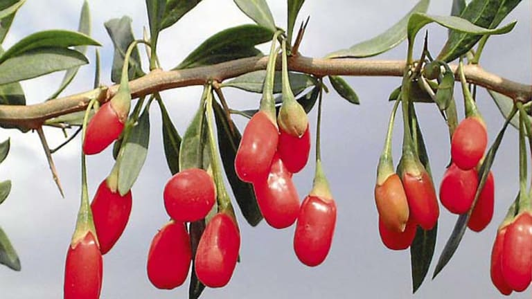 Super foods ... goji berries have had a lot of attention, but consumers may be better off eating an apple than paying for expensive juice.