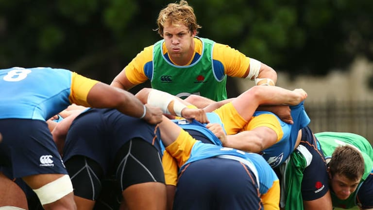 Comeback: Stephen Hoiles at a Waratahs training session.