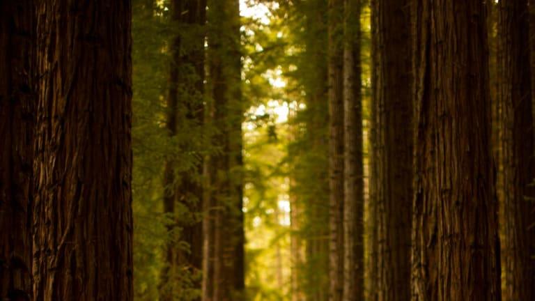 East Warburton Redwood Forest.