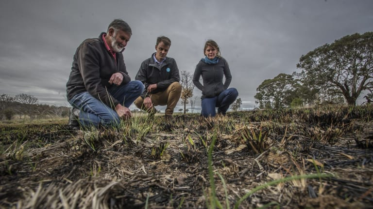 Ken Hodgkinson, left, Guy Barnett and Karissa Preuss inspect new life appearing at a grassland restoration burn near Hall.
