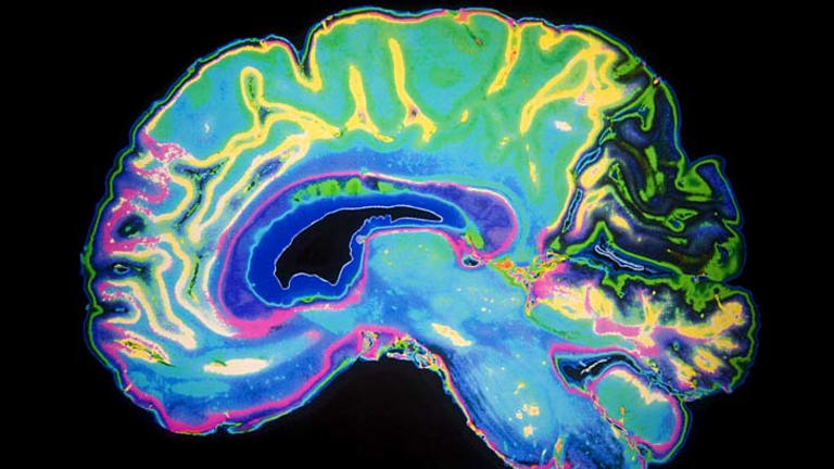 How exercise revs brain power