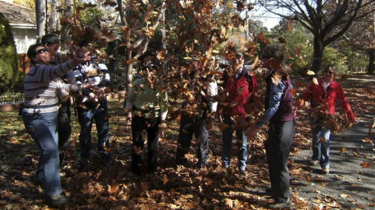 Young at heart: The Wanniassa Walkers step out in autumn.