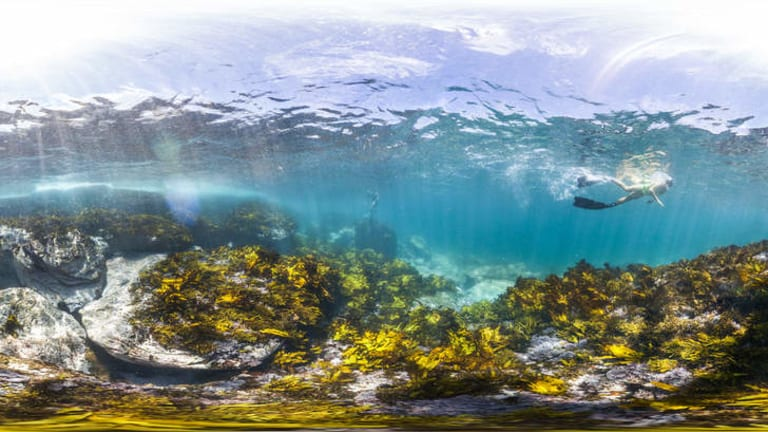An example of the images captured by the underwater camera.