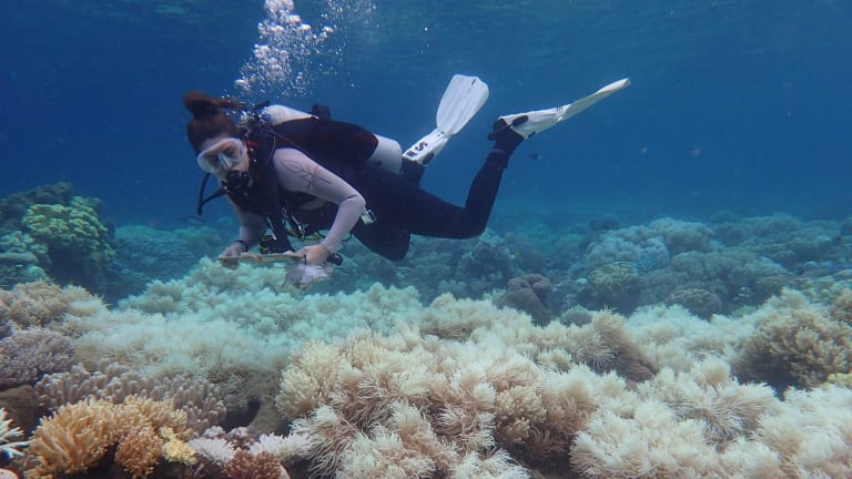 The death of half of the Great Barrier Reef's corals during two summers – according to preliminary estimates – probably failed to interrupt barbecue banter for most Australians.