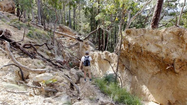 Part of a  collapsed hillside at Mt Sugarloaf.