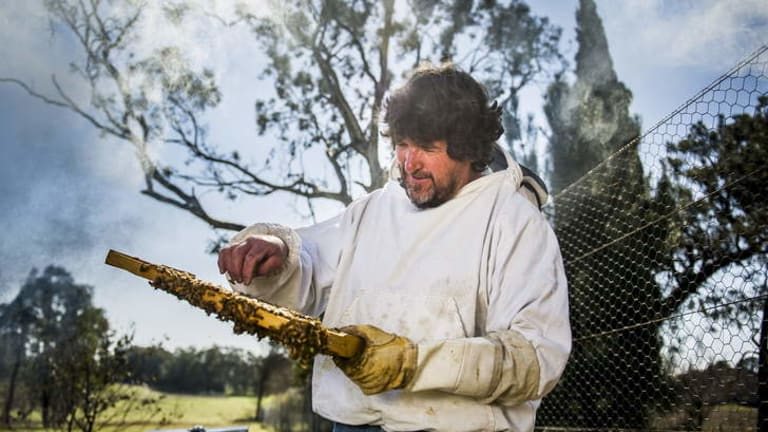 Clean: Australia is the only honey producer free of the varroa mite.