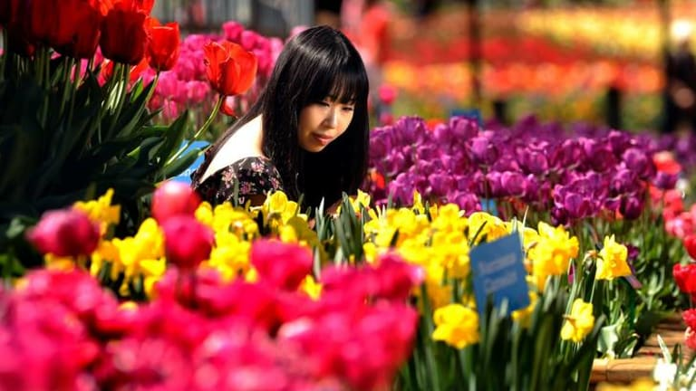 International finance student at the Australian National University Michelle Yao from China taking in the sights at Canberra's Floriade.