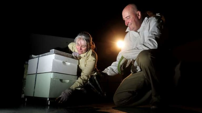 Carmen Pearce-Brown and Todd Brown installing bee hives on the roof of Hotel Realm, Barton.