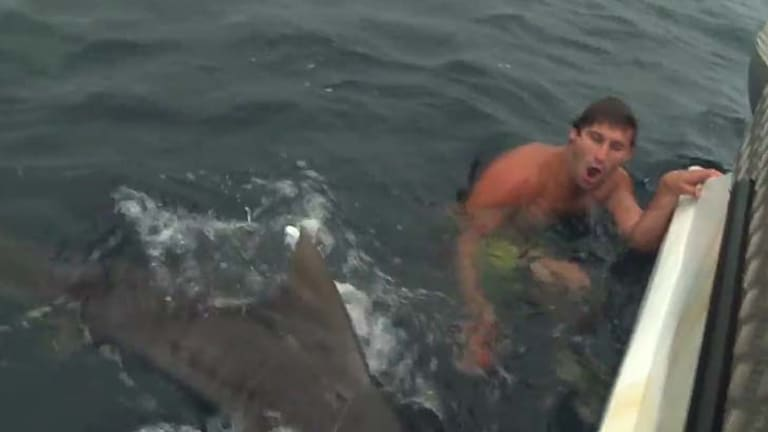 Gold Coast man regrets risky shark stunt