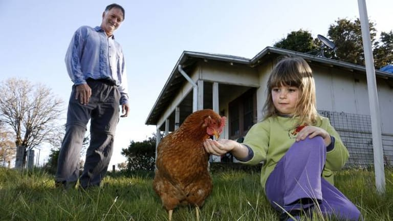 Andrew Collins watches daughter Grace Rutherford-Collins feed Blondie the chicken in front of their Coppins Crossing home, they are having to move due to the development in the Molonglo Valley.