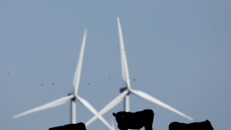 Cattle graze in a pasture against a backdrop of wind turbines which are part of the 155 turbine Smoky Hill Wind Farm near Vesper, Kan., Wednesday, Dec. 9, 2015.  (AP Photo/Charlie Riedel)
