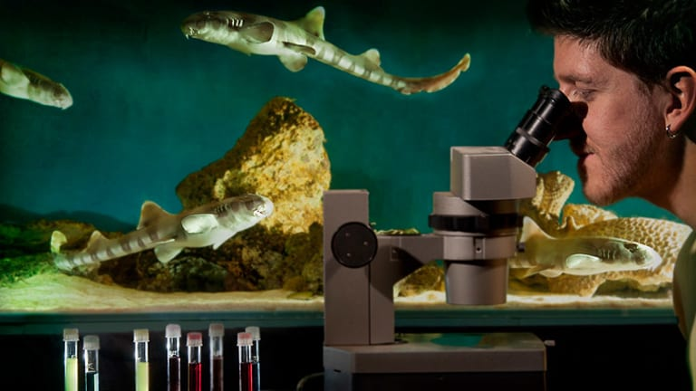 Ryan Kempster's work with bamboo shark embryos could help perfect electrical sharp repellents used by divers and surfers.