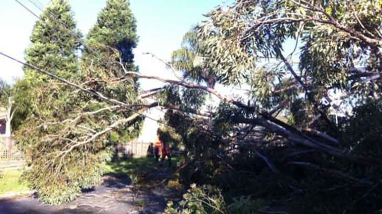 Strong Winds Cause Chaos