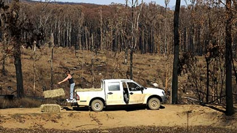 Park ranger and Wildlife Victoria volunteer Lellani Schaller, in the forest near Wandong, drops of hay for kangaroos left hungry by the bushfires.