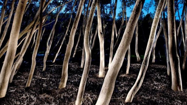 Mangrove Forest No. 2, Hawkesbury River (winner of the Plein Air Prize).   Photo: Peter Solness