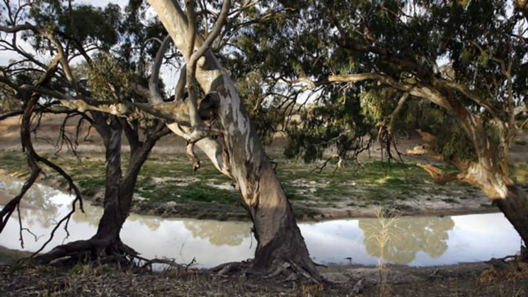 Plans to revive the Murray Darling Basin may not solve the river system's problems.