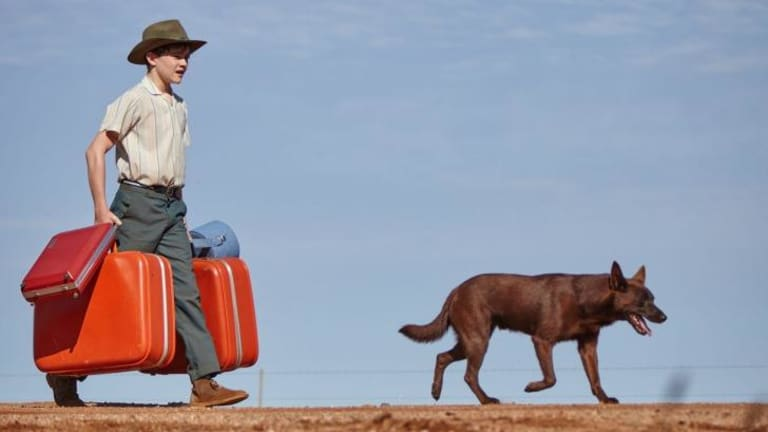 Mick (Levi Miller) and his canine companion in <i>Blue Dog</i>.