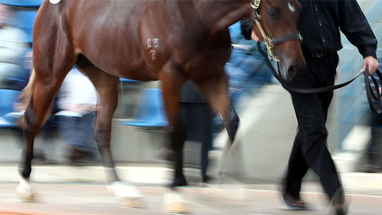 A horse has died of Hendra virus south of Brisbane.