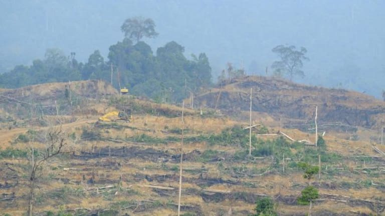 Heavy machinery makes new terraces for oil palm trees in freshly cleared forest inside the Leuser Ecosystem. Local activists say this clearing is illegal.