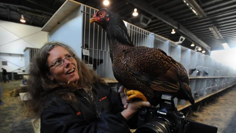 Keen poultry photographer Karen Johns, from Malanda on the Atherton Tableland  in Queensland, with her Indian game pullet  which she sold for $450.