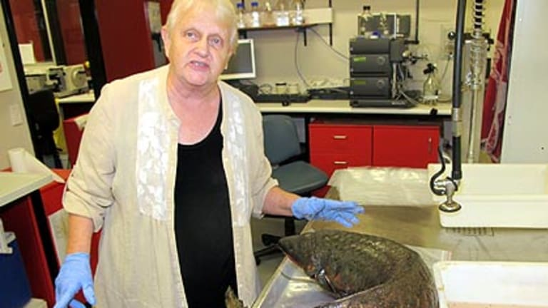Dr Anne Kemp, from the University of Queensland's Centre for Marine Science, shows bruising suffered by a lung fish which went over Wivenhoe Dam.