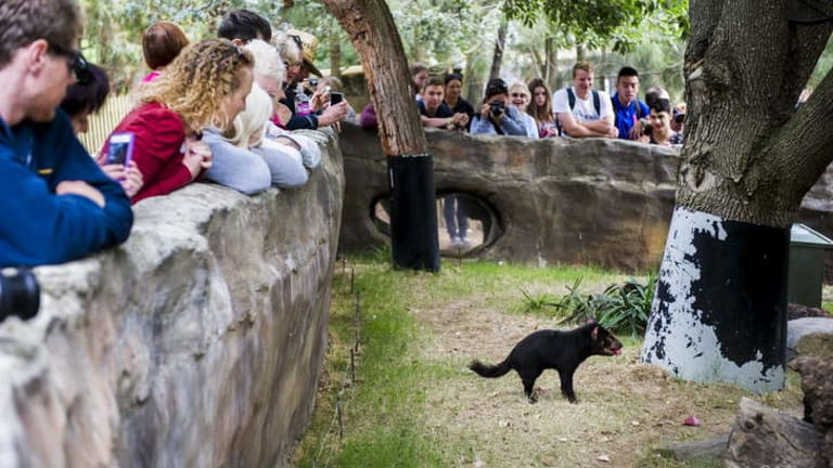Associate professor and Australian Research Council Future Fellow, Janine Deakin, holds a public lecture at the National Zoo and Aquarium talking about her research into Tasmanian Devils.