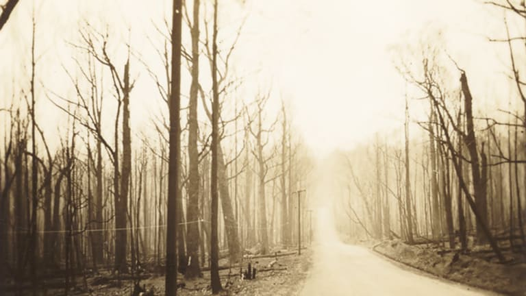The Healesville to Marysville road after Black Friday, 1939.